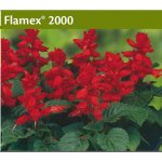 Salvia splendens Flamex 2000 1000 szt